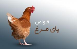پای-مرغ