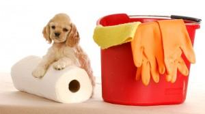 حیوانات-خانگی