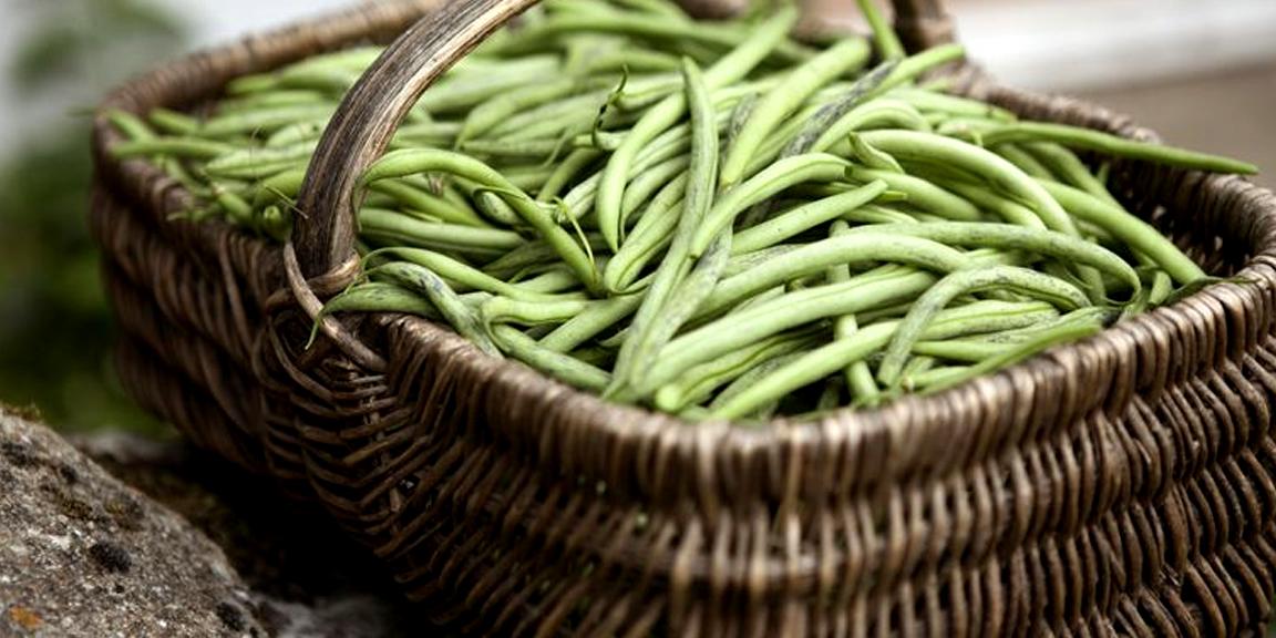 لوبیا سبز کم کربوهیدرات و سرشار از مواد مغذی